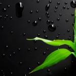 انرژی های سبز و فواید استفاده از آن